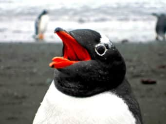 Google's Penguin 2.0 Update Is Live - Who Got Hit?